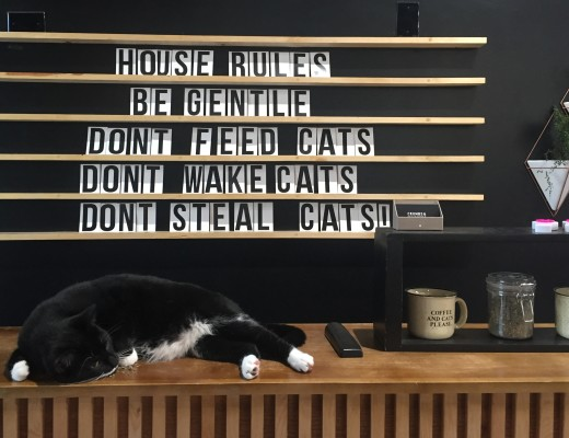 crumbs-and-whiskers-the-long-leash-cat-cafe-los-angeles